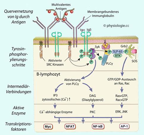 was sind antigene