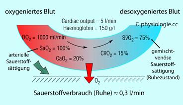 weniger sauerstoff im blut