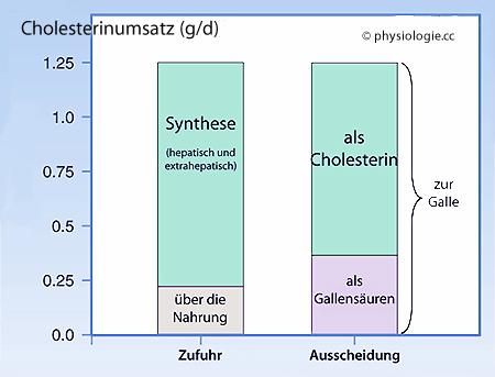 Physiologie Leber Lipidstoffwechsel