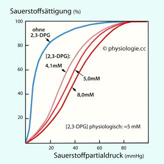 physiologie sauerstofftransport