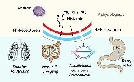 wirkung auf die synapse von nikotin