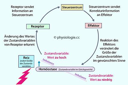 emergente eigenschaften biologie beispiel essay