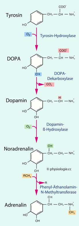 hohen dopaminspiegel senken