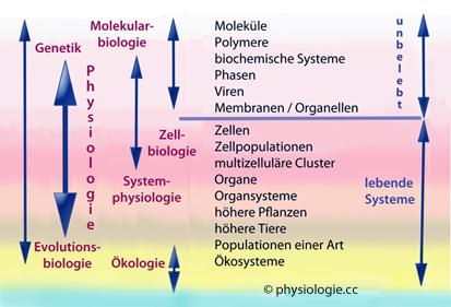 zelle organellen funktion