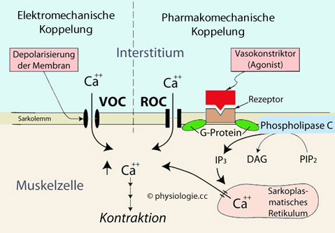 Physiologie Funktion Proteine