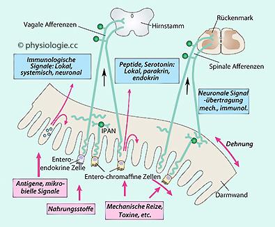 enzyme der verdauung