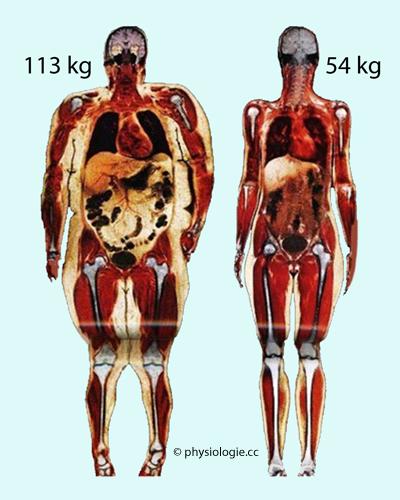 Physiologie: Gewicht und Körperzusammensetzung